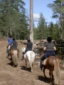 hestetur